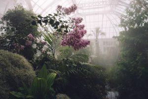 Greenhouse image courtesy of Echo Wang on Unsplash.