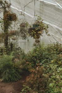 Abandoned interior of a greenhouse courtesy of Britt Gaiser from Unsplash.