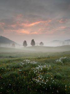 Image of a foggy meadow courtesy of Gianluca Grisenti from Pexels.